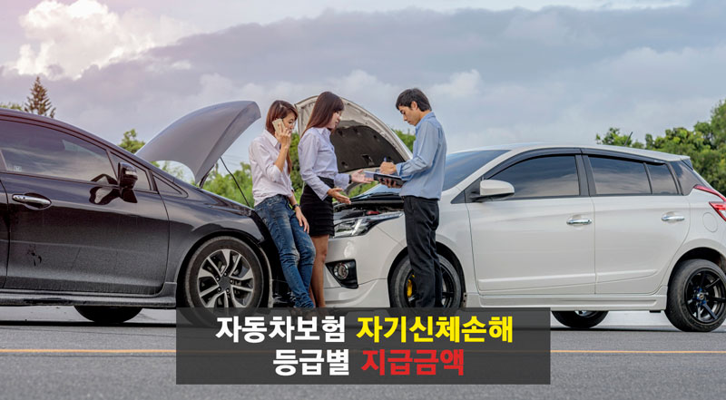 자동차보험 자기신체손해 등급별 지급금액